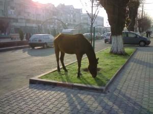 calafat-calul-paste-in-centru_9eec1d48cfeccb